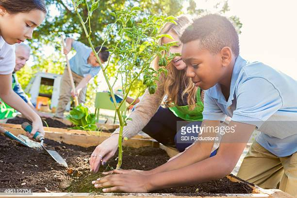 teacher instrucing students while gardening during science class - tuinieren stockfoto's en -beelden
