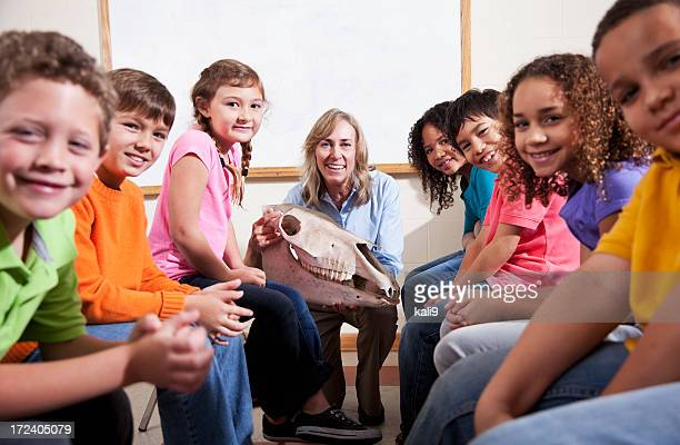teacher showing animal skull to students - zoo keeper stock pictures, royalty-free photos & images