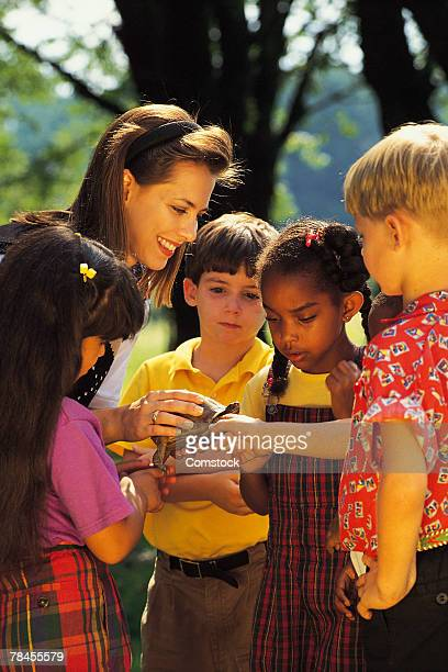 teacher showing class a box turtle - zoology stock pictures, royalty-free photos & images