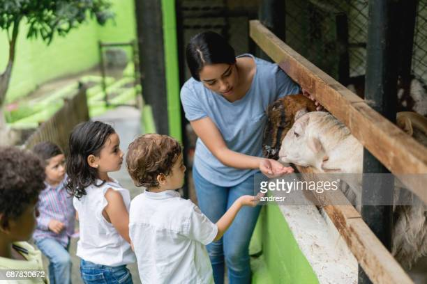 teacher with a group of young students at an animal farm - livestock stock pictures, royalty-free photos & images