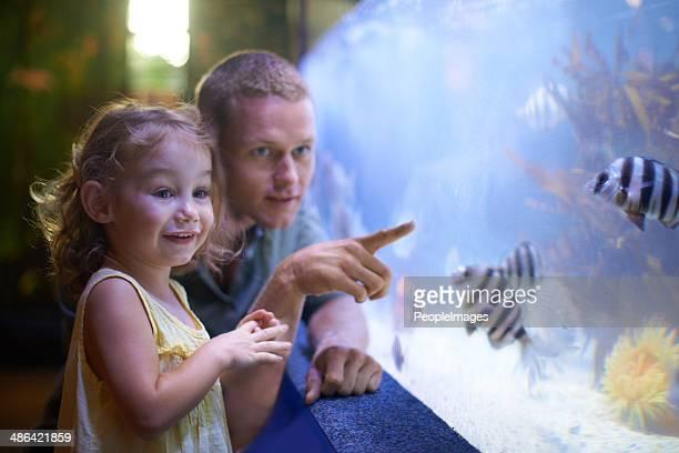Enseigner son pour apprécier la nature