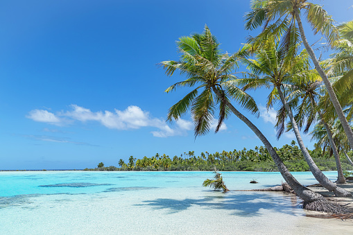 Teahatea Fakarava French Polynesia Atoll Beach 873654064