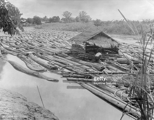 A teak raft becomes a boatman's home for several months on the way down river to Bangkok This quantity of teak is worth 40000