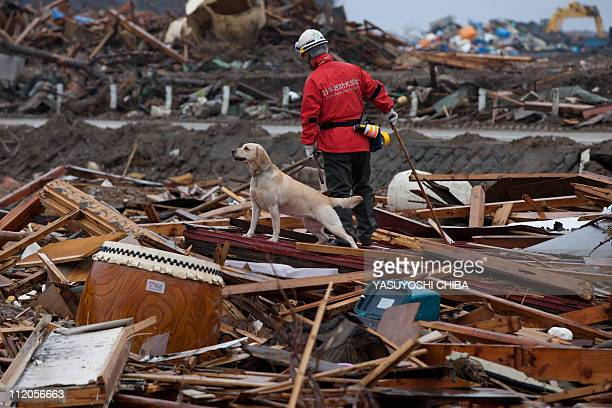 A team member from NPO Japan Rescue Dog Association and his dog search for victims during a joint operation with the Metropolitan Police Department...