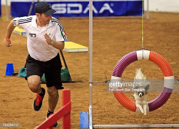 Team Mexico's Mika a Papillon leaps in midair leaping through a hoop as Oscar Gonzalez runs to keep up during the 2012 IFCS World Agility...