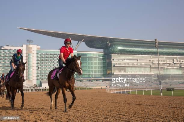Team of Aidan O'Brien stable horses training at the Meydan Racecourse prior to Dubai World Cup 2018 on March 30 2018 in Dubai United Arab Emirates