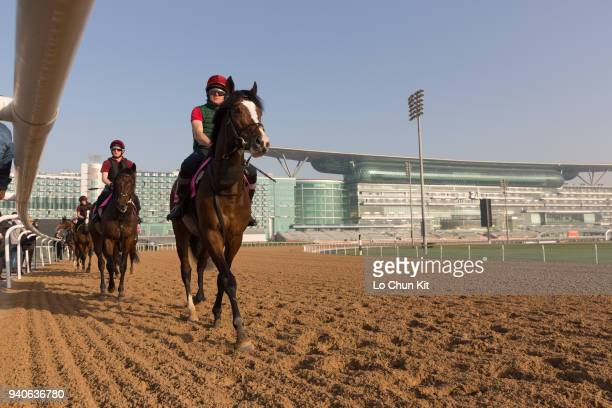 Team of Aidan O'Brien stable horses training at the Meydan Racecourse prior to Dubai World Cup 2018 on March 29 2018 in Dubai United Arab Emirates