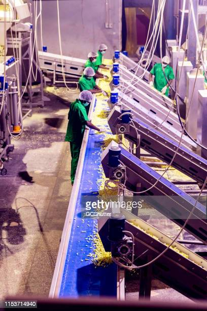 Team of Factory Workers Checking the Quality of Freshly Prepared Snacks at a Factory in Africa