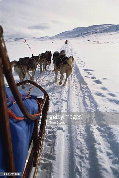 team of huskies pulling sledge, rear view, lapland, sweden - swedish lapland stock photos and pictures