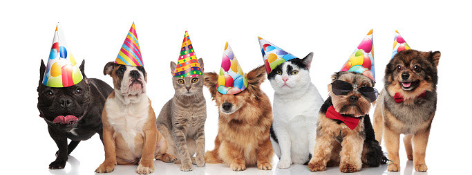 team of seven happy pets wearing colorful birthday hats 1034236476