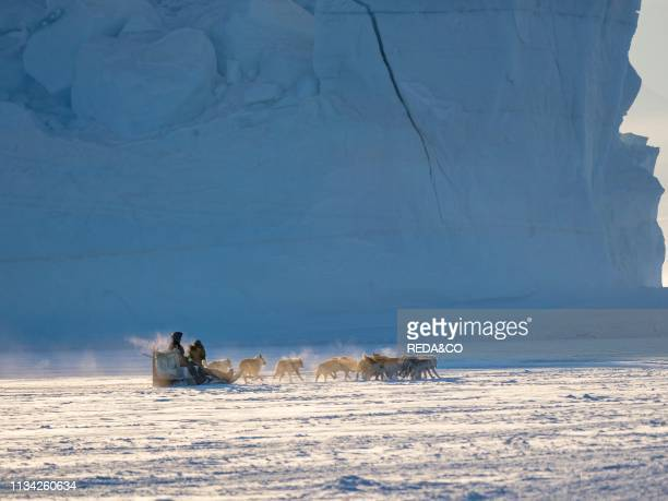 Team of sled dog during winter in Uummannaq in the north west of Greenland Fisherman driving his dog team on the frozen fjord North America Greenland...