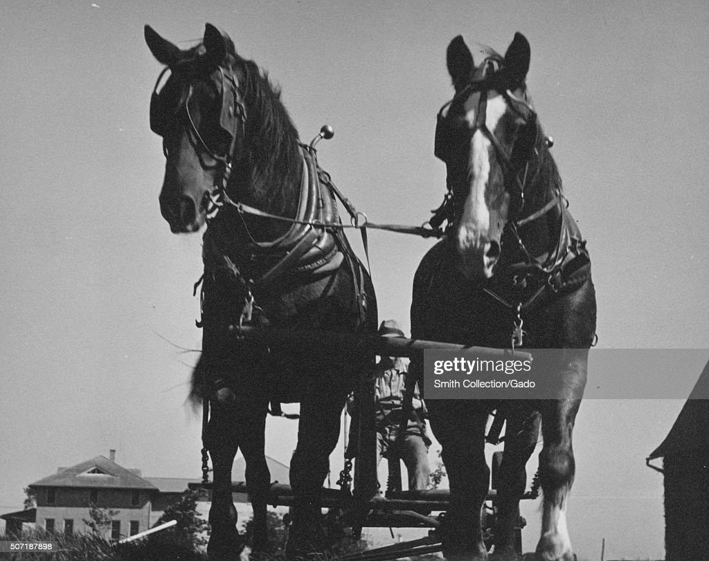 Team Of Two Work Horses Hitched To A Wagon Farm House Visible In The Fotografia De Noticias Getty Images