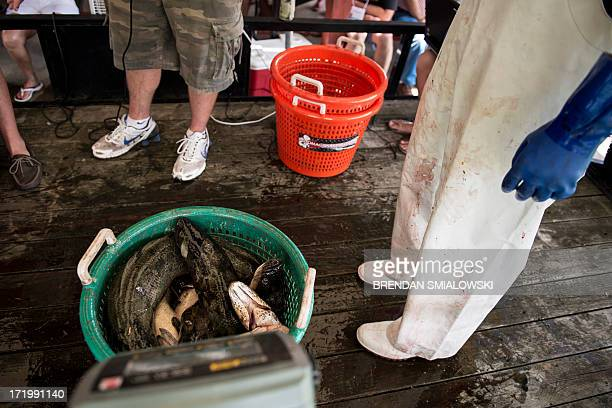 A team's catch of snakehead is weighed in during the Potomac Snakehead Tournament at Smallwood State Park on June 30 2013 in Marbury Maryland The...