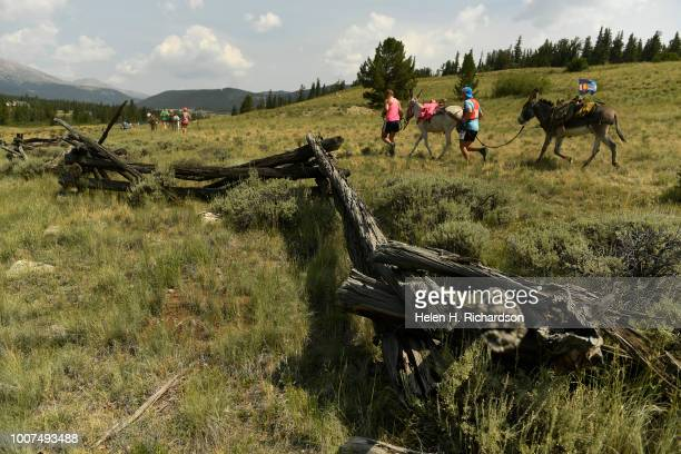 Teams of donkeys and runners head towards Mosquito Pass as they take part in the 70th annual World Championship Pack Burro Race on July 29 in...