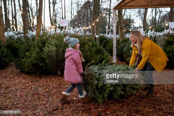 teamwork makes the dreamwork - christmas tree farm stock pictures, royalty-free photos & images