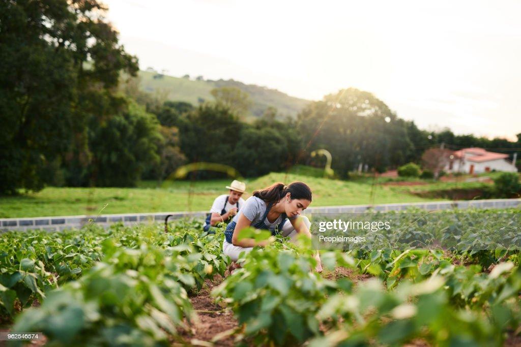 Teamwork makes the green work : Stock Photo