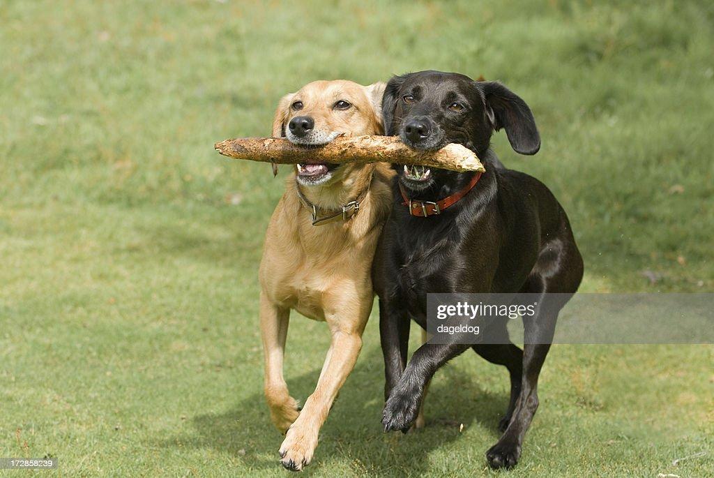 teamwork! : Stock Photo