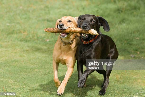teamwork! - stick stock photos and pictures
