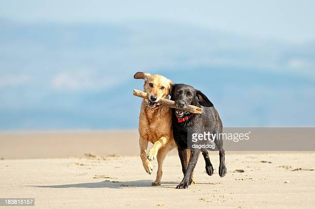 teamwork - dog stock pictures, royalty-free photos & images