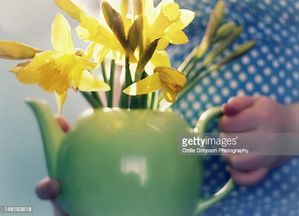 Teapot full of daffodils