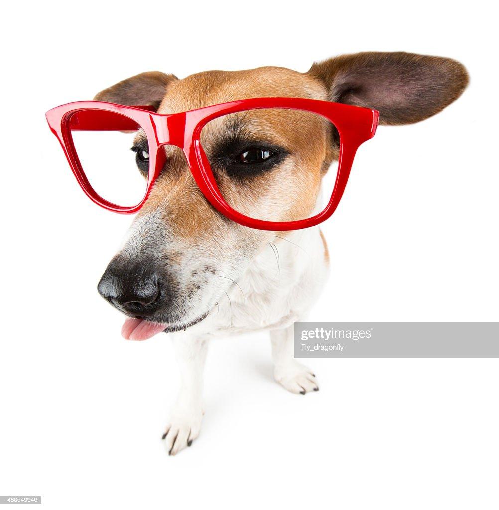 teased cão mostrando língua : Foto de stock