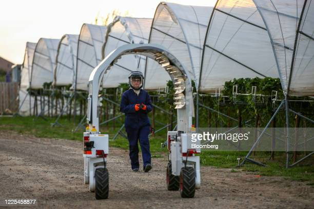 A technician drives a Thorvald autonomous modular robot developed by Saga Robotics to a poly tunnel to complete an UltraViolet light treatment on a...