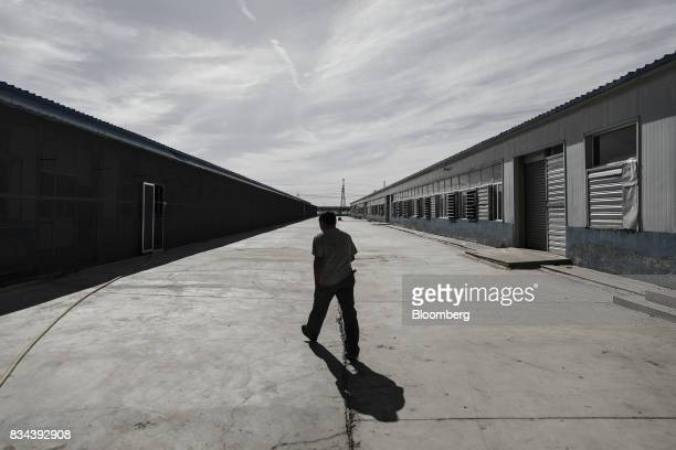 A technician walks between warehouse containing bitcoin mining machines at a mining facility operated by Bitmain Technologies Ltd in Ordos Inner...