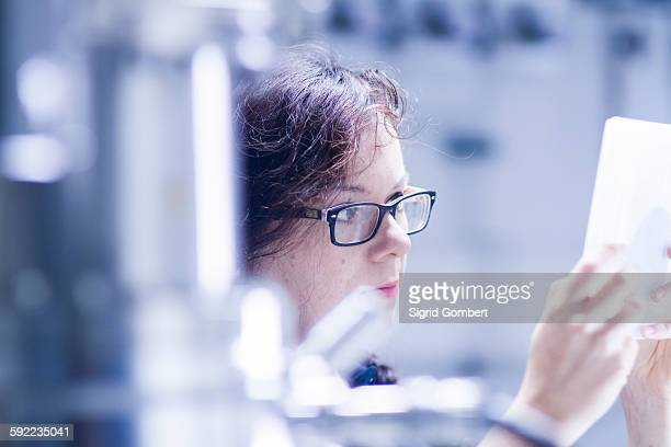 technician working in laboratory - sigrid gombert stock pictures, royalty-free photos & images