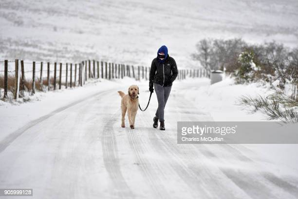Ted an Irish Doodle is walked by his owner on Divis mountain on January 17 2018 in Belfast Northern Ireland The Met Office has placed an amber...