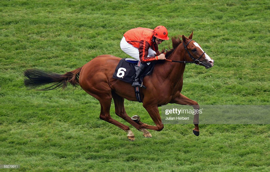The London Clubs Maiden Fillies Stakes : News Photo