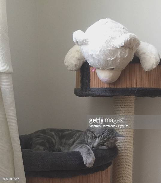 Teddy Bear On Scratching Post While Cat Resting At Home