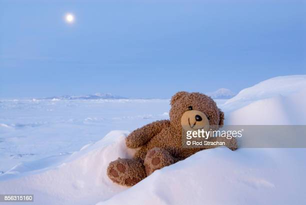 Teddy bear relaxing in snow drift