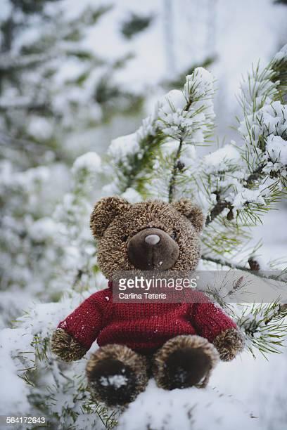 A teddy bear sitting in a snowy tree