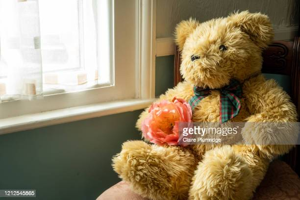 teddy bear with a coral peony in its lap sitting on a chair next to a window. - teddy bear stock pictures, royalty-free photos & images