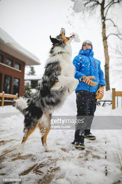 a teen boy and his dog play in winter snow - angela auclair stock pictures, royalty-free photos & images