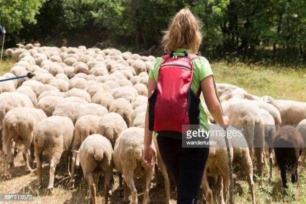 Teen girl herds sheep in Italy