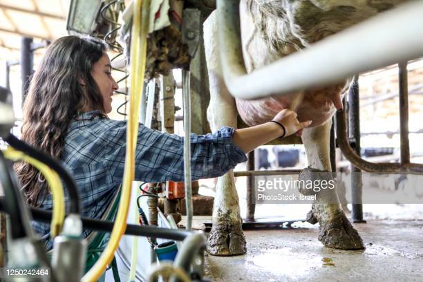 teen milks a cow - suction tube stock pictures, royalty-free photos & images