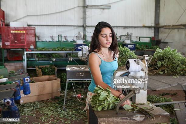 teen on production line - child labour stock pictures, royalty-free photos & images