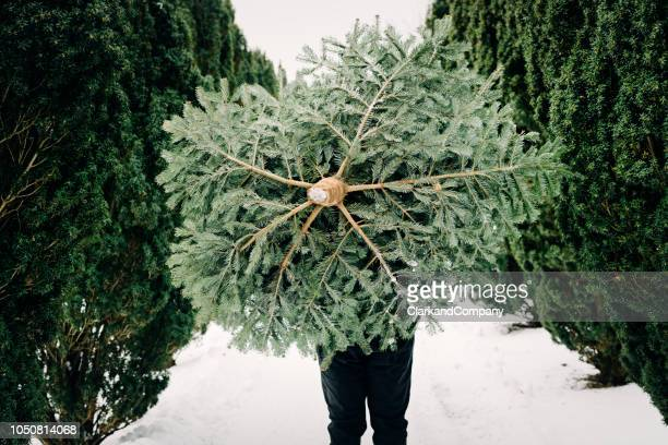 teenage boy carrying a christmas tree home. - christmas tree stock pictures, royalty-free photos & images