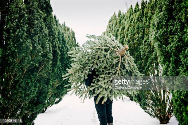teenage boy carrying a christmas tree home. - atmosphere stock pictures, royalty-free photos & images