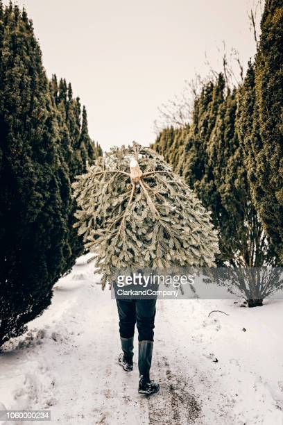 teenage boy carrying a christmas tree home. - dragging stock pictures, royalty-free photos & images