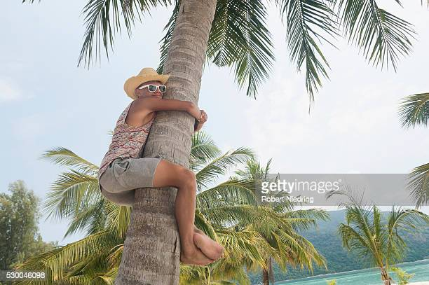 teenage boy climbing palm tree, koh lipe, thailand - tree hugging stock pictures, royalty-free photos & images