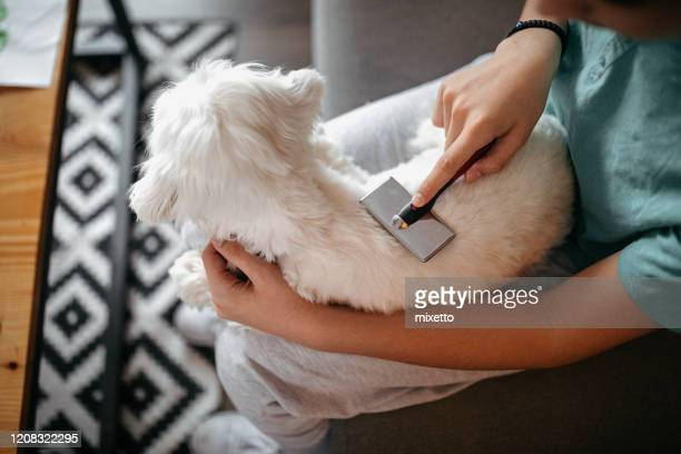 teenage boy grooming his dog in living room - brushing stock pictures, royalty-free photos & images