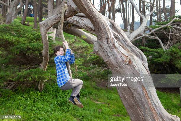 teenage boy hanging and swinging from coastal cypress tree in forest - jason todd stock photos and pictures