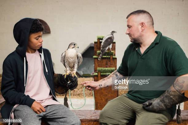 teenage boy holding a peregrine falcon - zoology stock pictures, royalty-free photos & images
