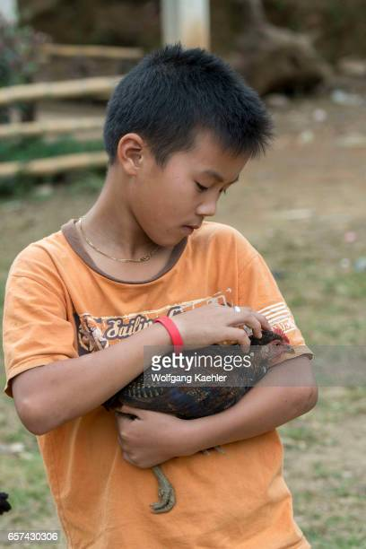 A teenage boy is holding a chicken at Ban Muangkeo Village a cultural heritage village on the Mekong River near Luang Prabang in Central Laos