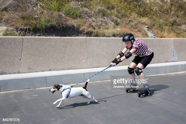 A teenage boy on roller skates wearing full protective gear is pulled along a walkway by a Jack Russell dog Sunny Sands beach Folkestone Kent UK