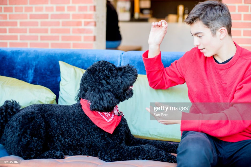 Teenage boy playing with pet dog on sofa : Stock Photo