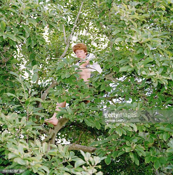 Teenage boy (15-17) sitting in branches of tree, portrait