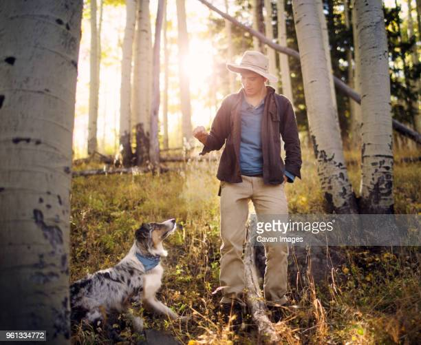 teenage boy standing with dog amidst trees in forest - flagstaff arizona stock pictures, royalty-free photos & images